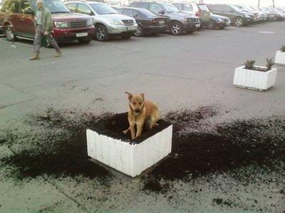 عکس میکرب ترین سگ دنیا